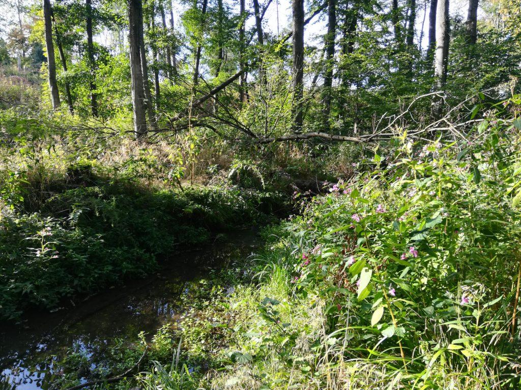 Wald und Wasser